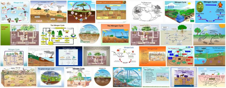 What is Nitrogen Cycle