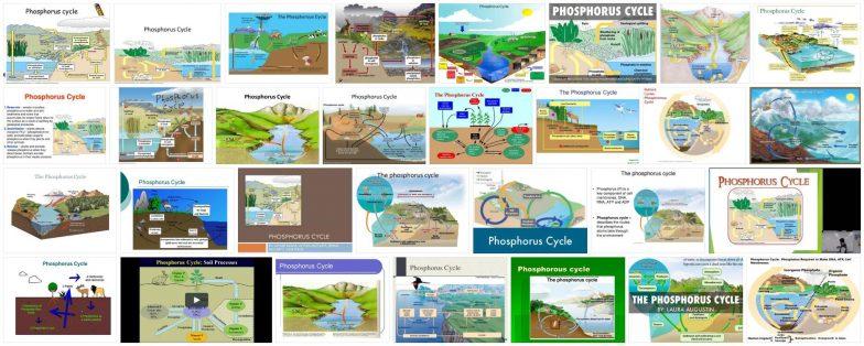 What is the phosphorus cycle